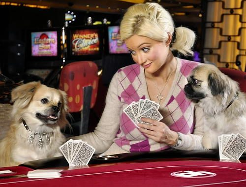 EXCLUSIVE: Holly Madison's dog runs off through a Vegas casino with a borrowed $3.2 million collar